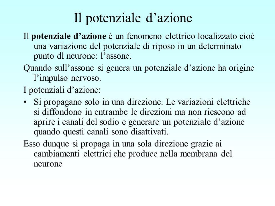 Il potenziale dazione Il potenziale dazione è un fenomeno elettrico localizzato cioè una variazione del potenziale di riposo in un determinato punto d