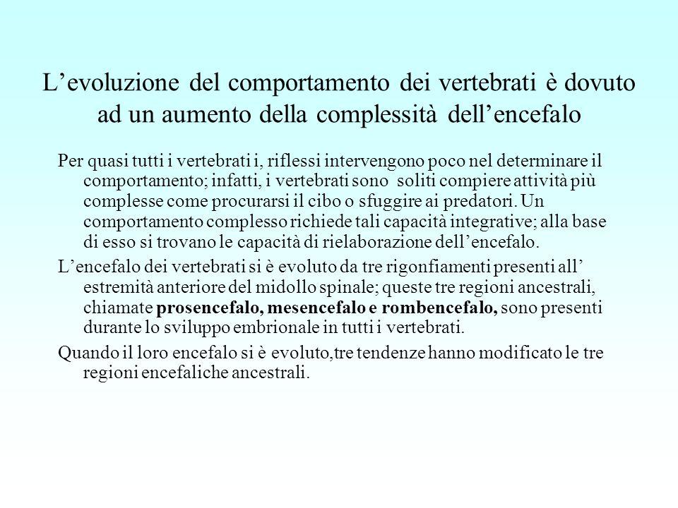 Levoluzione del comportamento dei vertebrati è dovuto ad un aumento della complessità dellencefalo Per quasi tutti i vertebrati i, riflessi intervengo