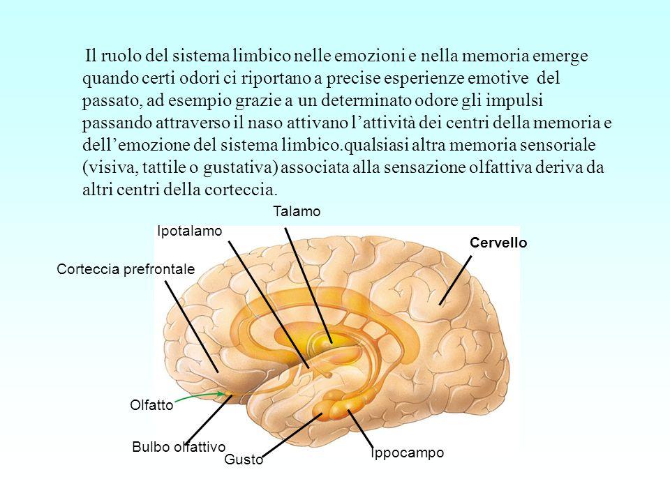 Il ruolo del sistema limbico nelle emozioni e nella memoria emerge quando certi odori ci riportano a precise esperienze emotive del passato, ad esempi