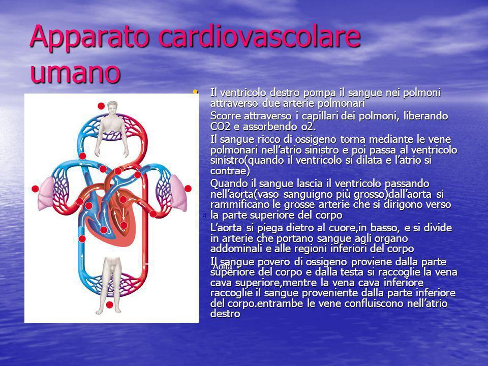 Apparato cardiovascolare umano Il ventricolo destro pompa il sangue nei polmoni attraverso due arterie polmonari Il ventricolo destro pompa il sangue