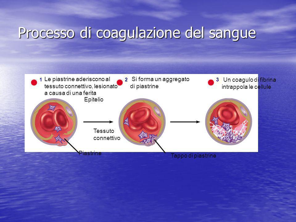 Processo di coagulazione del sangue Epitelio 1 Le piastrine aderiscono al tessuto connettivo, lesionato a causa di una ferita Tessuto connettivo Piast