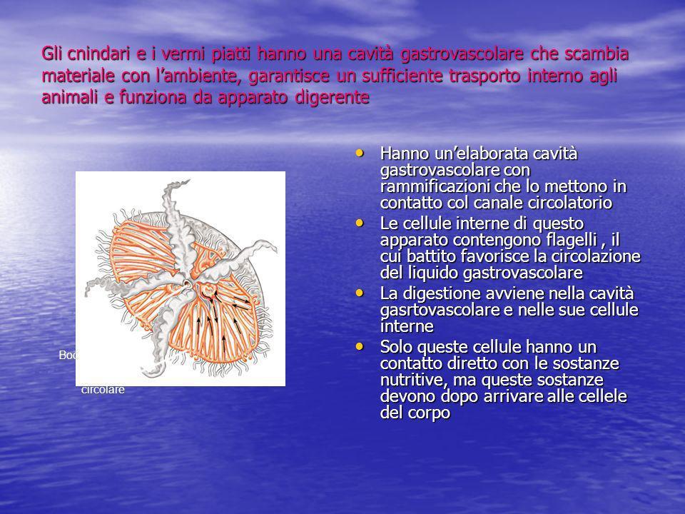 Gli cnindari e i vermi piatti hanno una cavità gastrovascolare che scambia materiale con lambiente, garantisce un sufficiente trasporto interno agli a