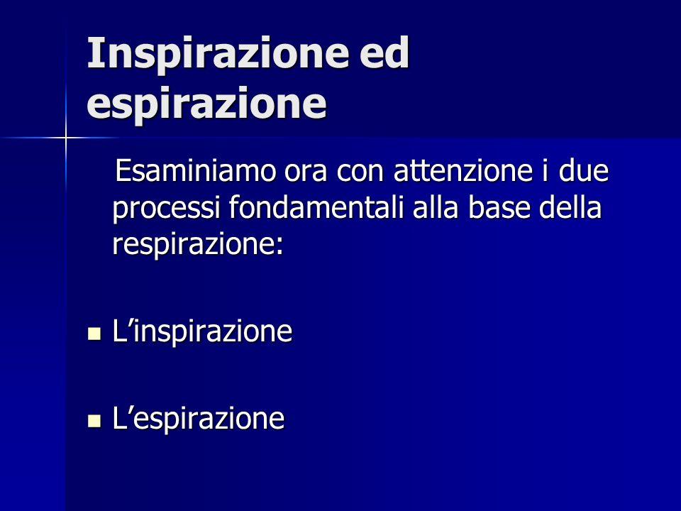 Inspirazione ed espirazione Esaminiamo ora con attenzione i due processi fondamentali alla base della respirazione: Esaminiamo ora con attenzione i due processi fondamentali alla base della respirazione: Linspirazione Linspirazione Lespirazione Lespirazione