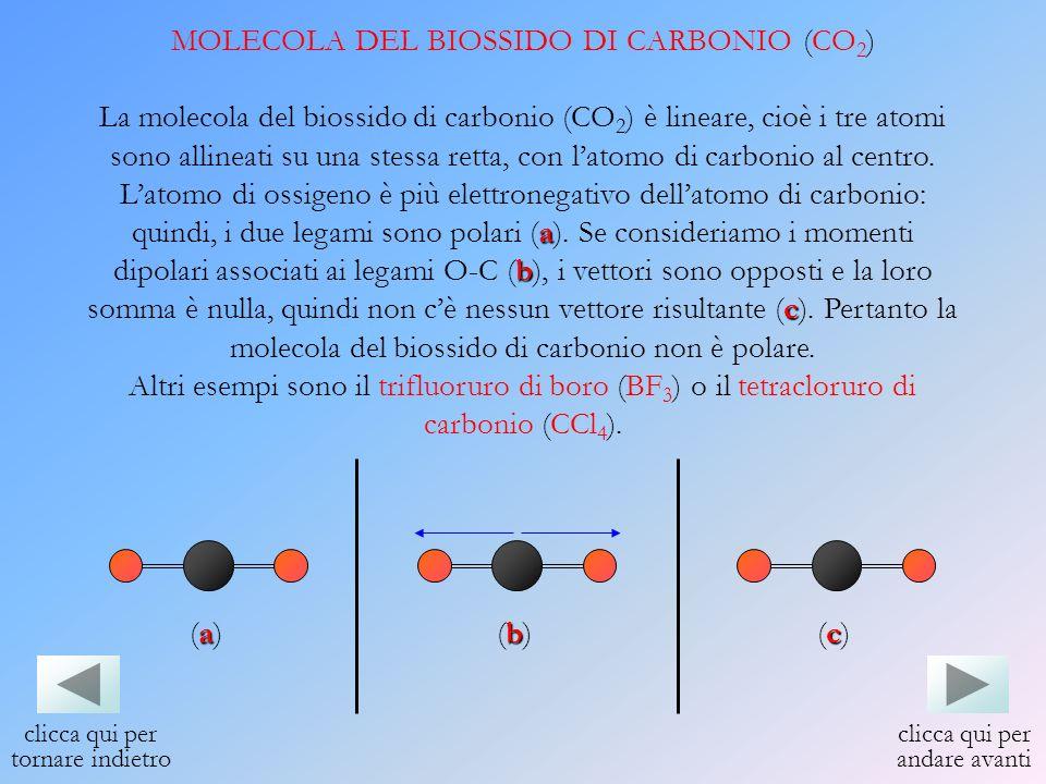MOLECOLA DEL BIOSSIDO DI CARBONIO (CO 2 ) La molecola del biossido di carbonio (CO 2 ) è lineare, cioè i tre atomi sono allineati su una stessa retta,