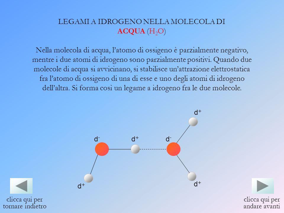 LEGAMI A IDROGENO NELLA MOLECOLA DI ACQUA (H 2 O) Nella molecola di acqua, latomo di ossigeno è parzialmente negativo, mentre i due atomi di idrogeno