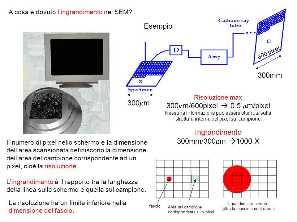 Il numero di pixel nello schermo e la dimensione dellarea scansionata definiscono la dimensione dellarea del campione corrispondente ad un pixel, cioè