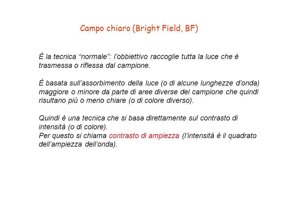 Campo chiaro (Bright Field, BF) È la tecnica normale: lobbiettivo raccoglie tutta la luce che è trasmessa o riflessa dal campione. È basata sullassorb