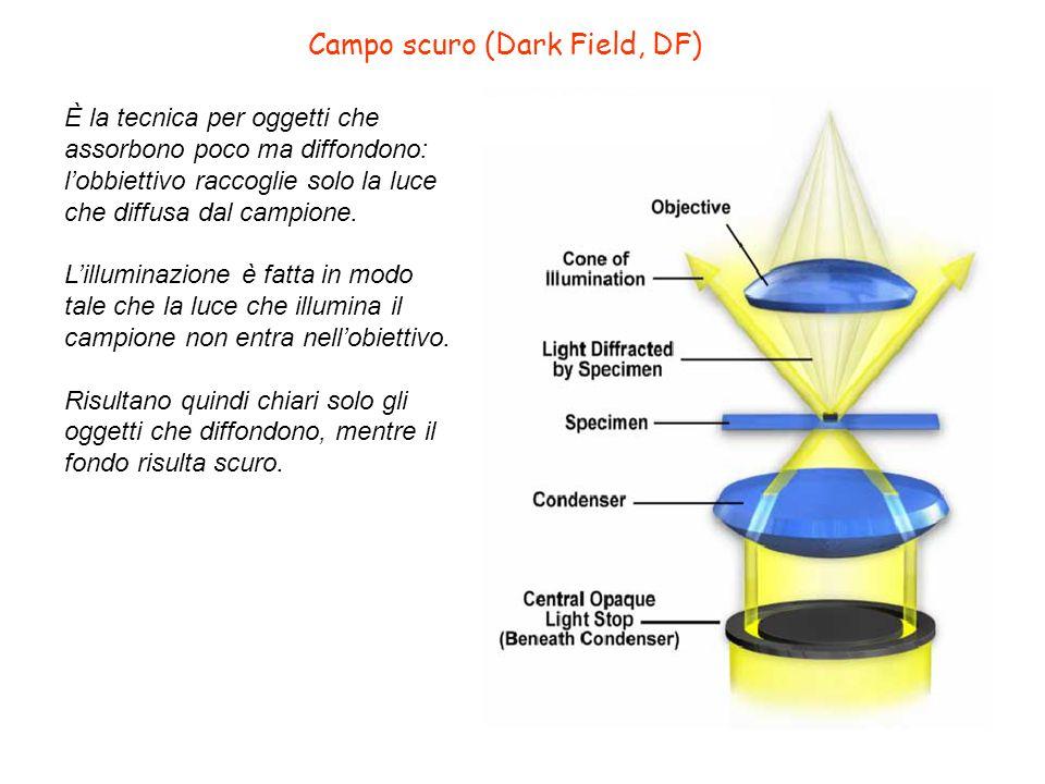 Campo scuro (Dark Field, DF) È la tecnica per oggetti che assorbono poco ma diffondono: lobbiettivo raccoglie solo la luce che diffusa dal campione. L
