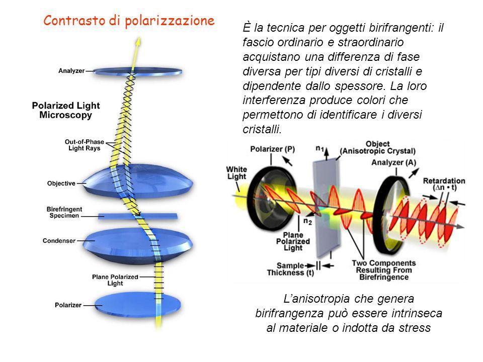 Contrasto di polarizzazione Lanisotropia che genera birifrangenza può essere intrinseca al materiale o indotta da stress È la tecnica per oggetti biri