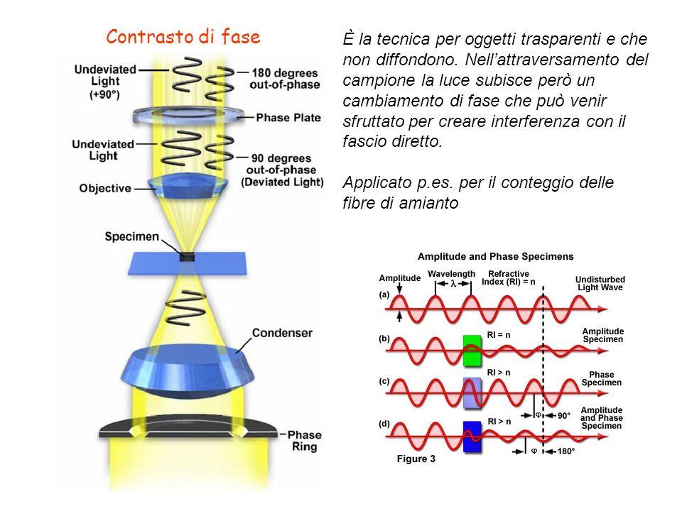 Contrasto di fase È la tecnica per oggetti trasparenti e che non diffondono. Nellattraversamento del campione la luce subisce però un cambiamento di f