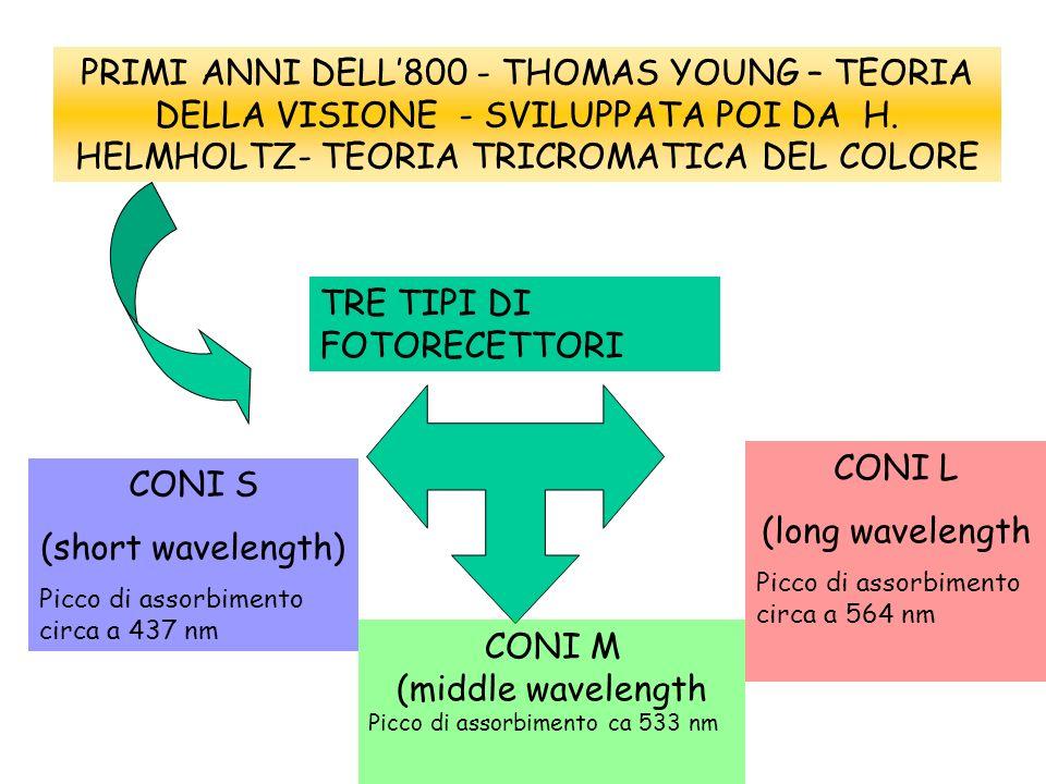 PRIMI ANNI DELL800 - THOMAS YOUNG – TEORIA DELLA VISIONE - SVILUPPATA POI DA H. HELMHOLTZ- TEORIA TRICROMATICA DEL COLORE TRE TIPI DI FOTORECETTORI CO