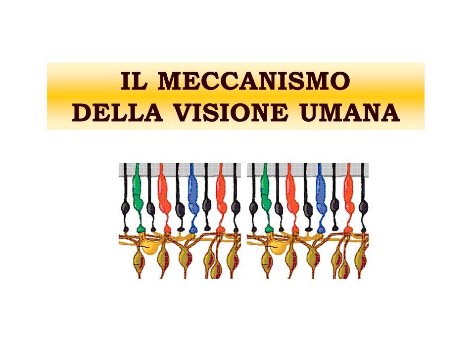 IL MECCANISMO DELLA VISIONE UMANA