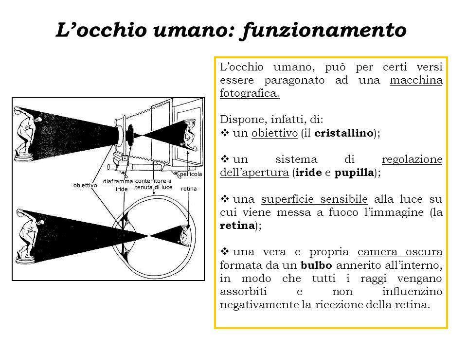Locchio umano: funzionamento Locchio umano, può per certi versi essere paragonato ad una macchina fotografica. Dispone, infatti, di: un obiettivo (il