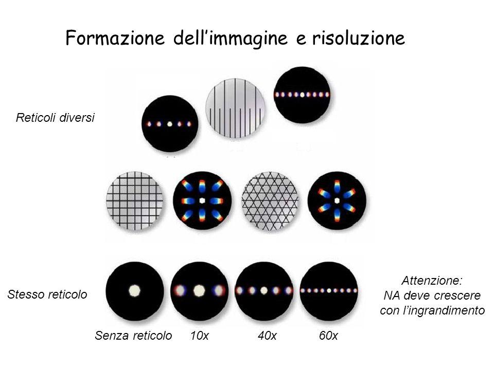 Formazione dellimmagine e risoluzione Senza reticolo 10x 40x 60x Attenzione: NA deve crescere con lingrandimento Stesso reticolo Reticoli diversi