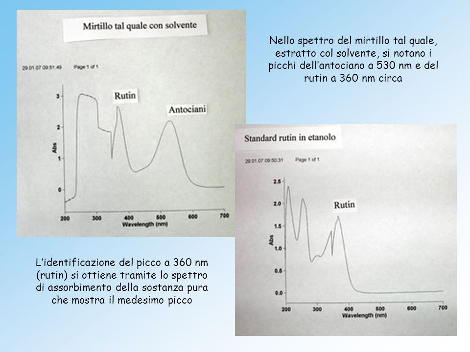 Nello spettro del mirtillo tal quale, estratto col solvente, si notano i picchi dellantociano a 530 nm e del rutin a 360 nm circa Lidentificazione del