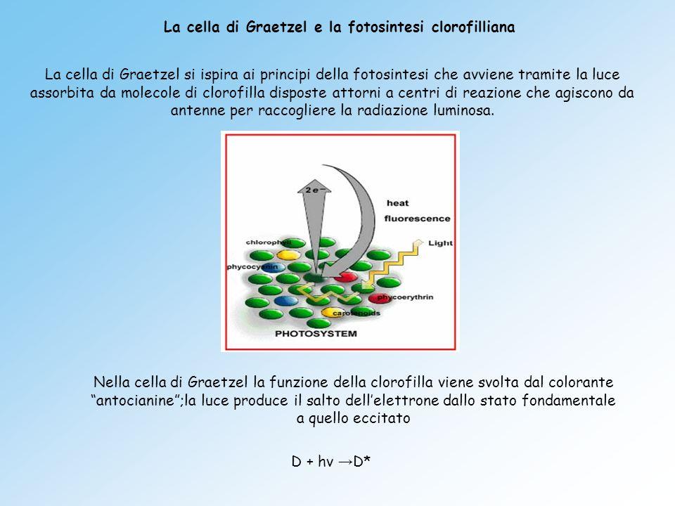 La cella di Graetzel si ispira ai principi della fotosintesi che avviene tramite la luce assorbita da molecole di clorofilla disposte attorni a centri