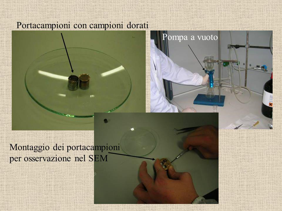 Portacampioni con campioni dorati Pompa a vuoto Montaggio dei portacampioni per osservazione nel SEM