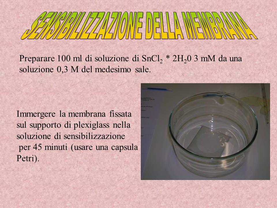 Preparare 100 ml di soluzione di SnCl 2 * 2H 2 0 3 mM da una soluzione 0,3 M del medesimo sale. Immergere la membrana fissata sul supporto di plexigla