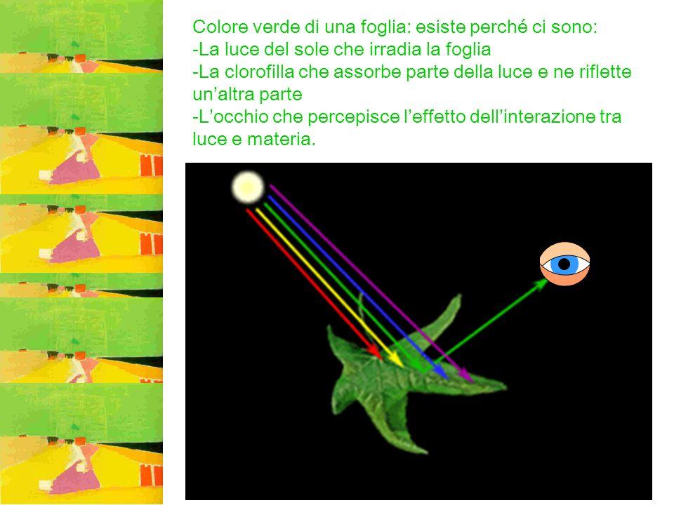 Colore verde di una foglia: esiste perché ci sono: -La luce del sole che irradia la foglia -La clorofilla che assorbe parte della luce e ne riflette u