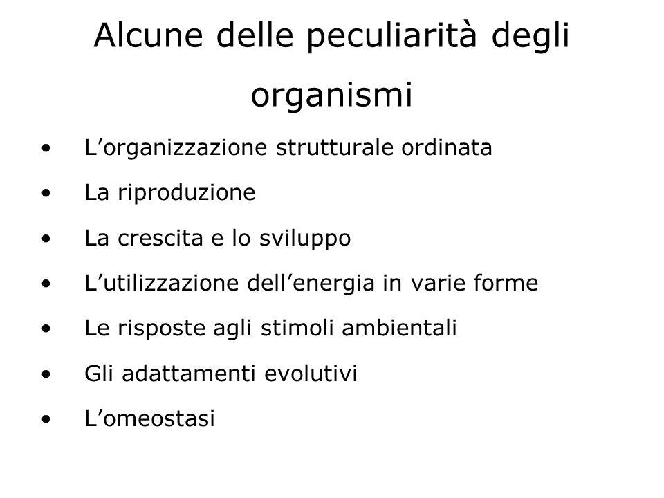 Dubbio vecchie teorie: LEVOLUZIONE delle CONOSCENZE sulla CIRCOLAZIONE Andrea VESALIO (1514-1564) Confuta lidea del setto interventricolare proposta da Galeno, ma non apporta conferme sperimentali in proposito JACOPO BERENGARIO DA CARPI (1470-1530) - Prima chiara e completa descrizione del cuore con le sue valvole - Come Vesalio, nega ancora la comunicazione tra ventricoli R.