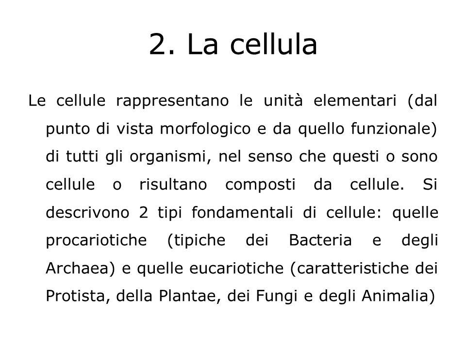 Il modo di procedere della scienza Il termine scienza deriva dal latino scire che vuol dire sapere.