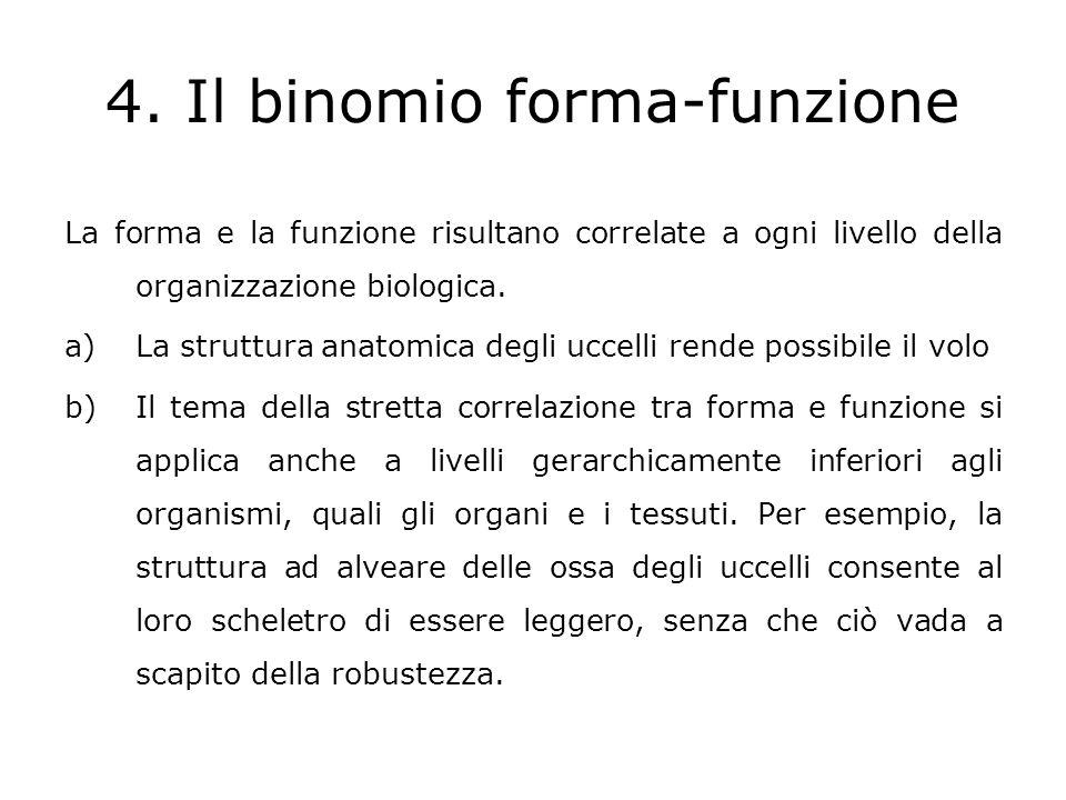 c)La forma delle cellule corrisponde esattamente alle loro funzioni, anche nel caso di unestrema specializzazione d)Relazione forma-funzione ha anche un contenuto estetico.