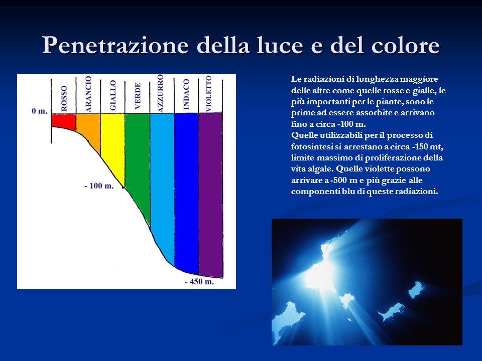 Penetrazione della luce e del colore Le radiazioni di lunghezza maggiore delle altre come quelle rosse e gialle, le più importanti per le piante, sono