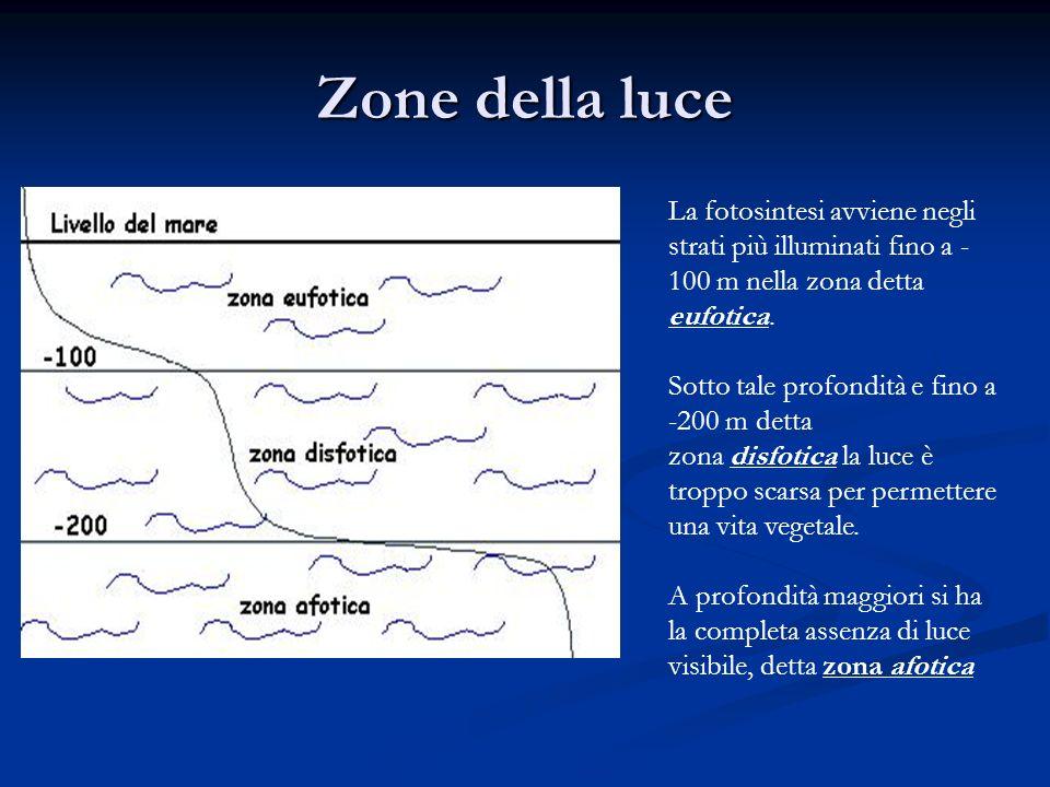 Zone della luce La fotosintesi avviene negli strati più illuminati fino a - 100 m nella zona detta eufotica. Sotto tale profondità e fino a -200 m det