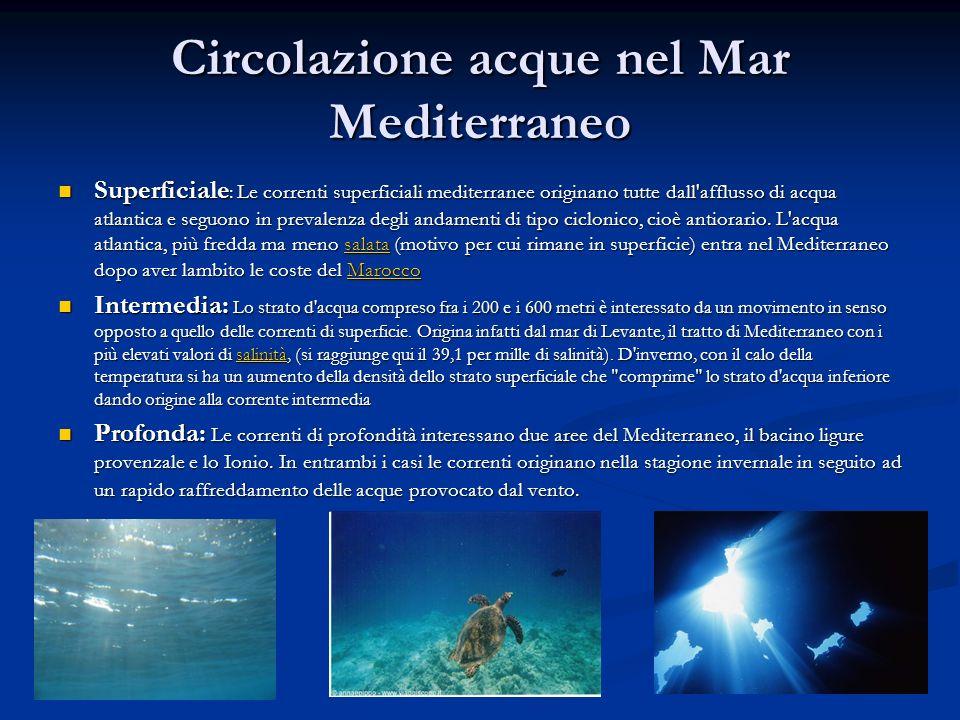 Superficiale : Le correnti superficiali mediterranee originano tutte dall'afflusso di acqua atlantica e seguono in prevalenza degli andamenti di tipo