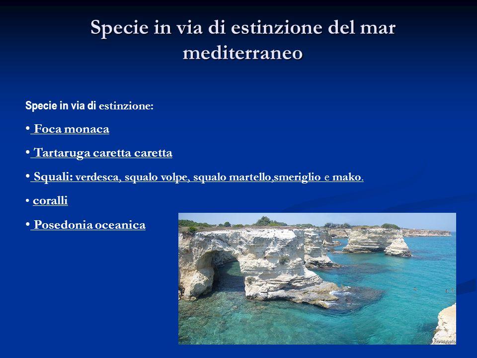 Specie in via di estinzione del mar mediterraneo Specie in via di estinzione: Foca monaca Tartaruga caretta caretta Squali: verdesca, squalo volpe, sq