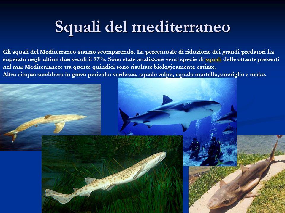 Squali del mediterraneo Gli squali del Mediterraneo stanno scomparendo. La percentuale di riduzione dei grandi predatori ha superato negli ultimi due
