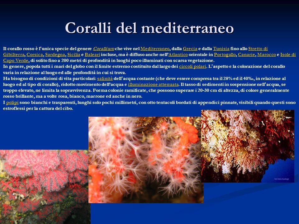 Coralli del mediterraneo Il corallo rosso è l'unica specie del genere Corallium che vive nel Mediterraneo, dalla Grecia e dalla Tunisia fino allo Stre