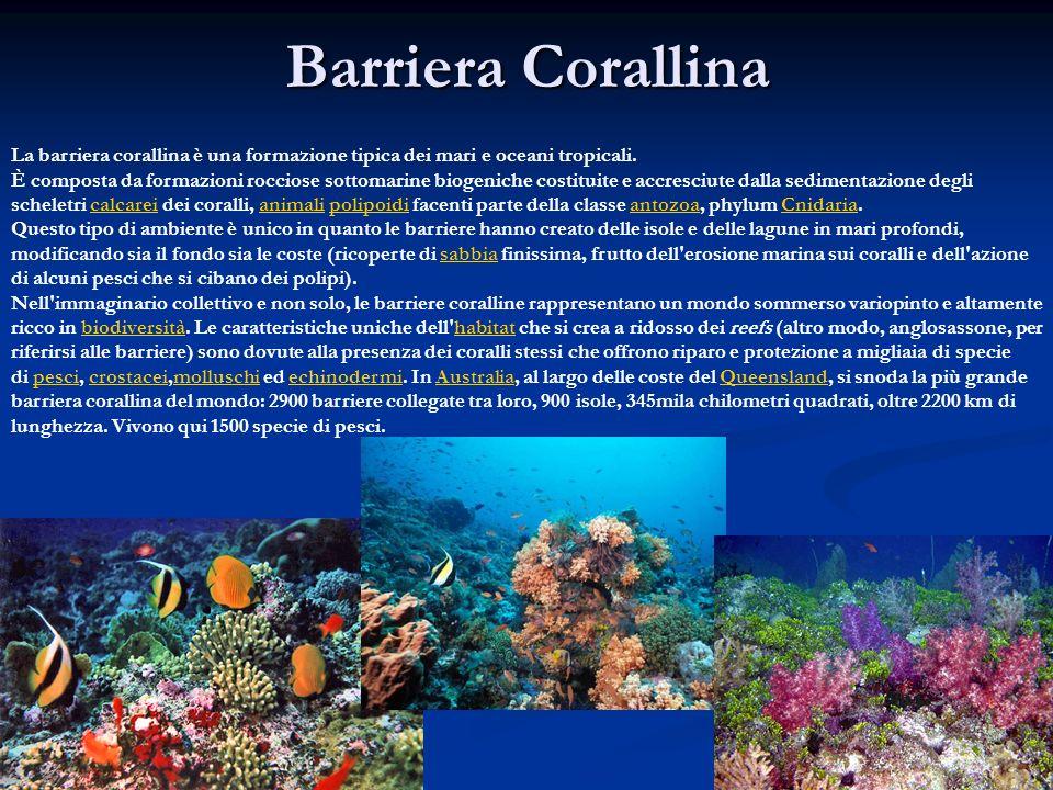 Barriera Corallina La barriera corallina è una formazione tipica dei mari e oceani tropicali. È composta da formazioni rocciose sottomarine biogeniche