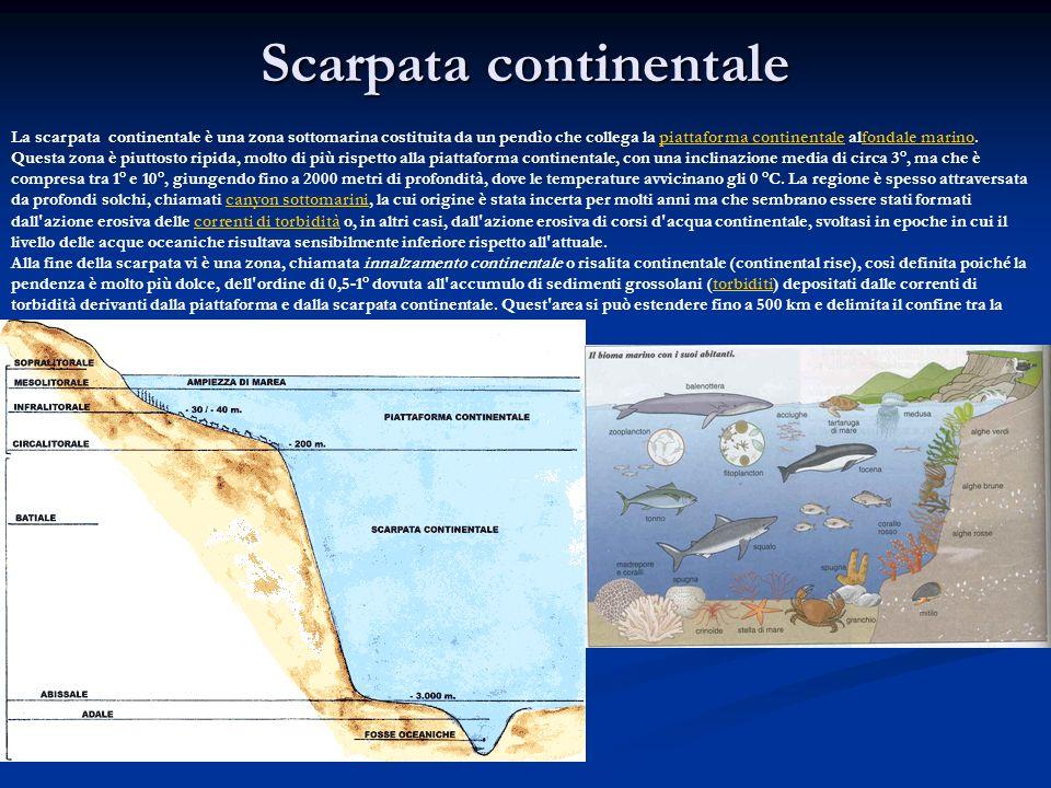 Scarpata continentale La scarpata continentale è una zona sottomarina costituita da un pendìo che collega la piattaforma continentale alfondale marino