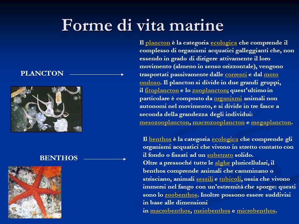 Forme di vita marine Il plancton è la categoria ecologica che comprende il complesso di organismi acquatici galleggianti che, non essendo in grado di