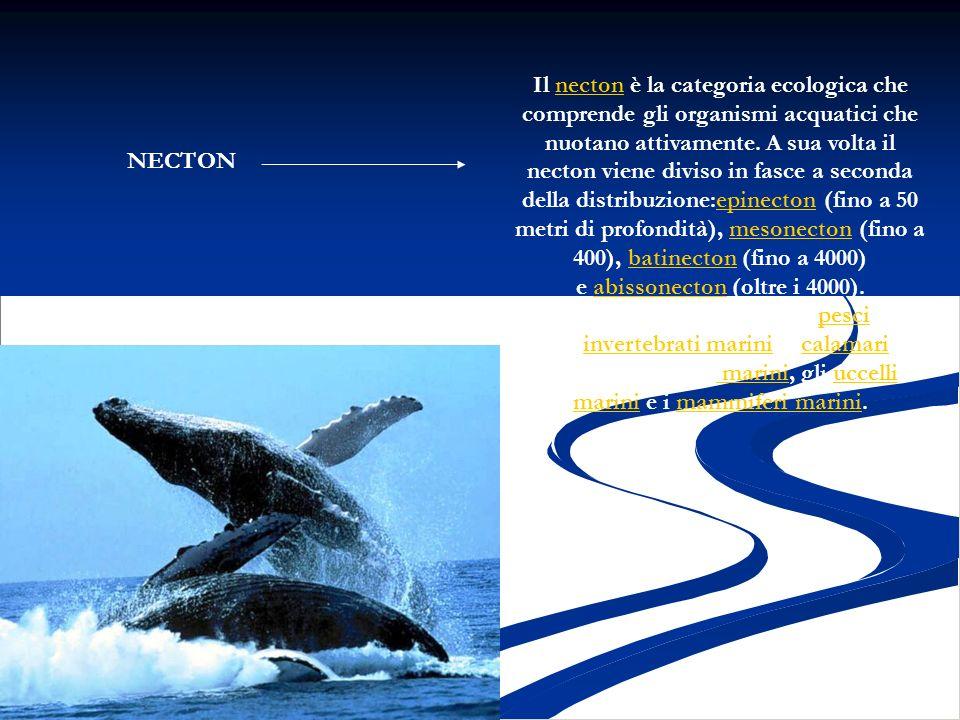 Il necton è la categoria ecologica che comprende gli organismi acquatici che nuotano attivamente. A sua volta il necton viene diviso in fasce a second