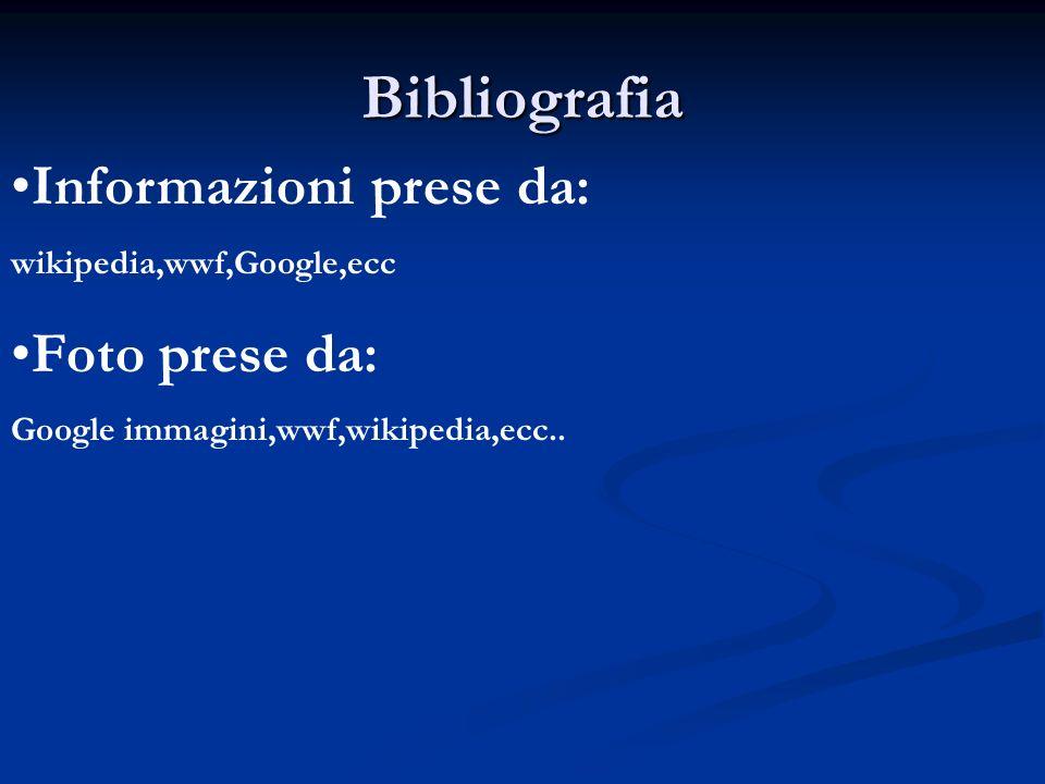 Bibliografia Informazioni prese da: wikipedia,wwf,Google,ecc Foto prese da: Google immagini,wwf,wikipedia,ecc..