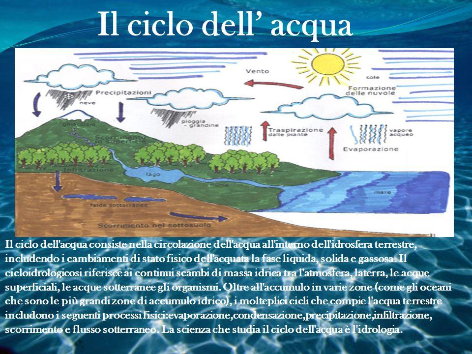La Distribuzione dell' Acqua sulla Terra Il nostro pianeta visto dallo spazio, appare formato per la maggior parte di acqua, infatti il 71% della sua