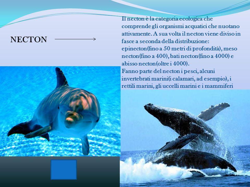Il plancton è la categoria ecologica che comprende il complesso di organismi acquatici galleggianti che, non essendo in grado di dirigere attivamente