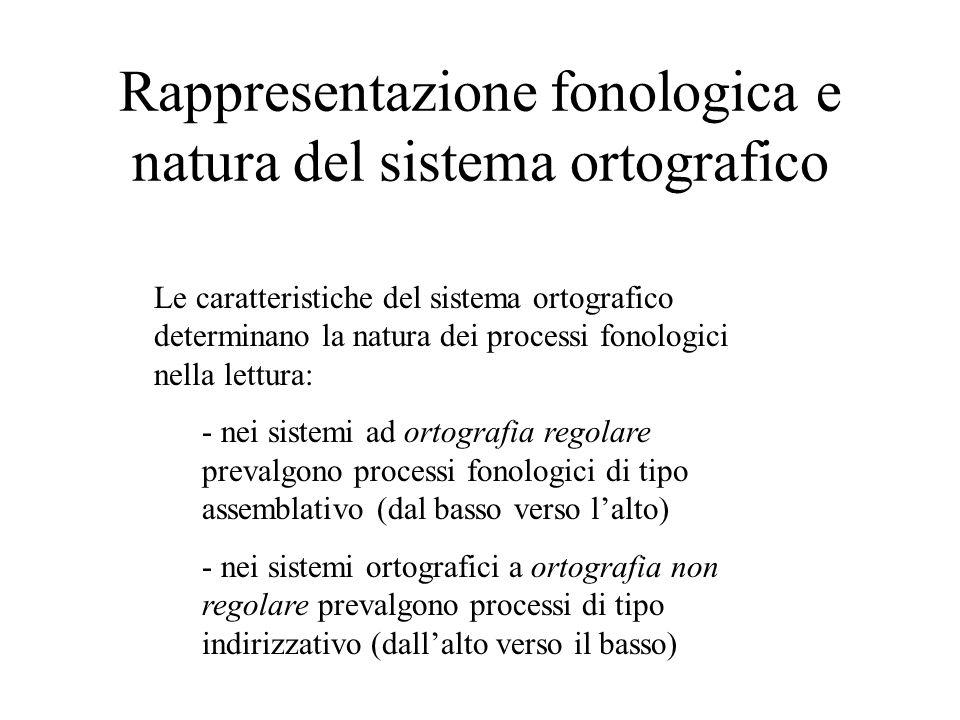 Rappresentazione fonologica e natura del sistema ortografico Le caratteristiche del sistema ortografico determinano la natura dei processi fonologici