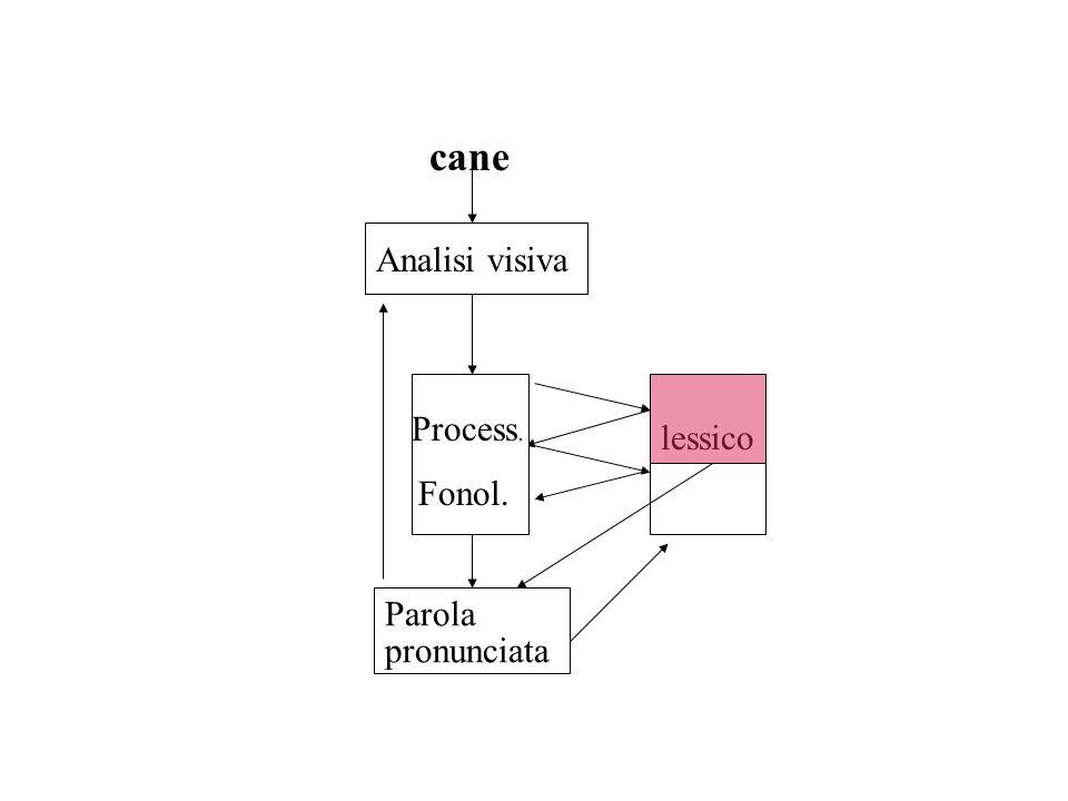 lessico Analisi visiva Process. Fonol. Parola pronunciata cane