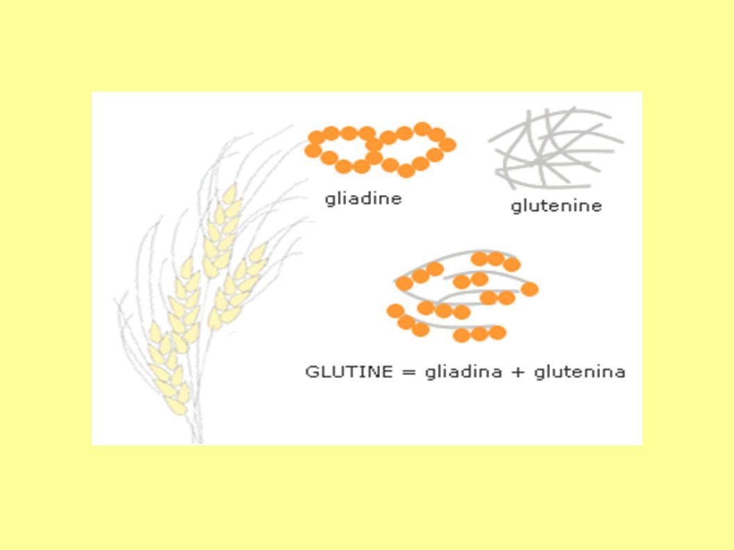 PREPARAZIONE Dove lo spazio lo consente, lavorare gli alimenti senza glutine in locali separati è la soluzione ottimale