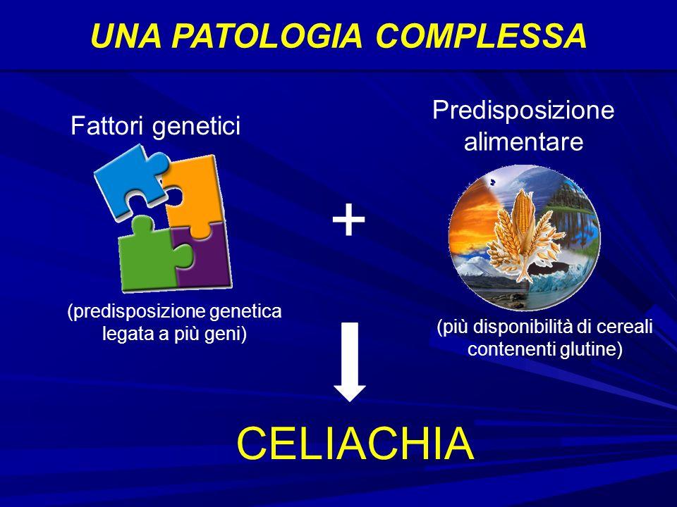 UNA PATOLOGIA COMPLESSA Fattori genetici Predisposizione alimentare + (predisposizione genetica legata a più geni) (più disponibilità di cereali contenenti glutine) CELIACHIA