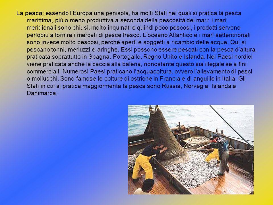 La pesca: essendo lEuropa una penisola, ha molti Stati nei quali si pratica la pesca marittima, più o meno produttiva a seconda della pescosità dei ma