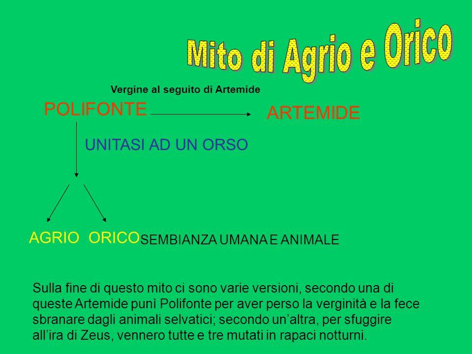 POLIFONTE ARTEMIDE UNITASI AD UN ORSO AGRIOORICO SEMBIANZA UMANA E ANIMALE Vergine al seguito di Artemide Sulla fine di questo mito ci sono varie vers