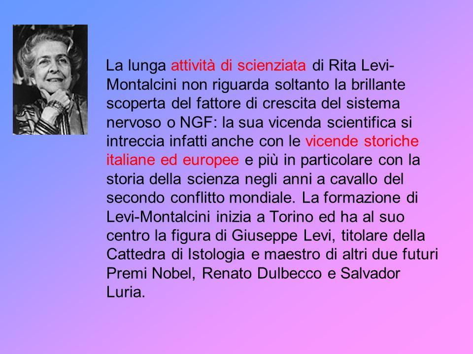 La lunga attività di scienziata di Rita Levi- Montalcini non riguarda soltanto la brillante scoperta del fattore di crescita del sistema nervoso o NGF