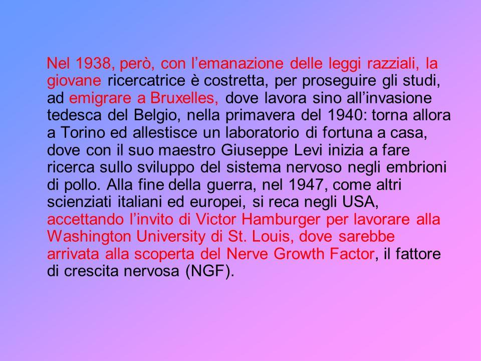Fino ad allora la Levi-Montalcini aveva svolto la sua ricerca sulle correlazioni nello sviluppo tra le varie parti del sistema nervoso e si era in seguito rivolta allo studio dello sviluppo dei neuroni dellembrione di pollo, cui si dedicò anche a St.
