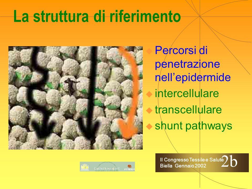II Congresso Tessile e Salute Biella Gennaio 2002 La struttura di riferimento Percorsi di penetrazione nellepidermide intercellulare transcellulare shunt pathways 2b