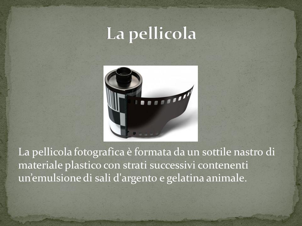 La pellicola fotografica è formata da un sottile nastro di materiale plastico con strati successivi contenenti unemulsione di sali d argento e gelatina animale.