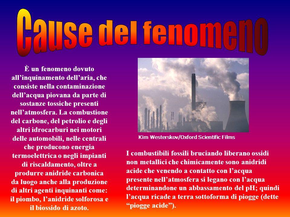 È un fenomeno dovuto allinquinamento dellaria, che consiste nella contaminazione dellacqua piovana da parte di sostanze tossiche presenti nellatmosfer